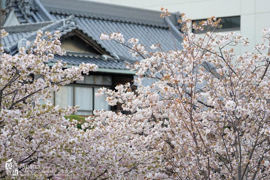 Japan-0071