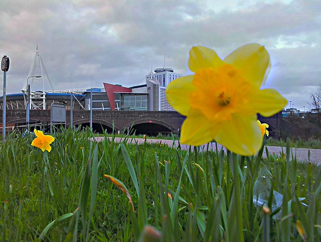 Capital in Bloom - ITV Weather pic