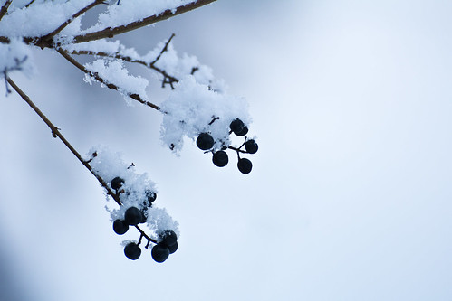 cold berries