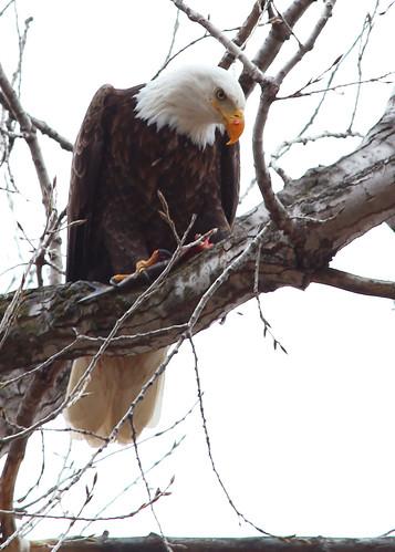 DeSoto Bend Wildlife Refuge