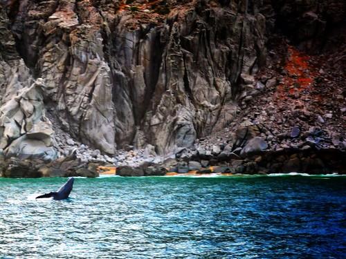 Cabo Sunset Cruise 2013