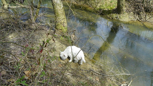 Investigating An Animal Path to the Water