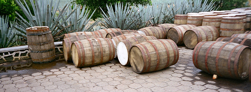blue agave behind oak barrels