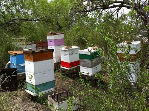 Honey flow at Elm Creek Spring 2013