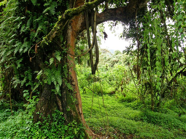 El bosque de Harenna