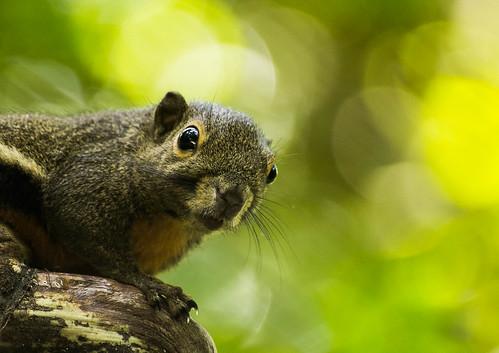 Squirrel by vishangshah