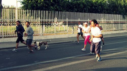 SOy fan de los que corren con sus perros :)