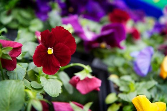 Home Depot DigIn Flowers