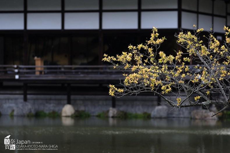Japan-0522
