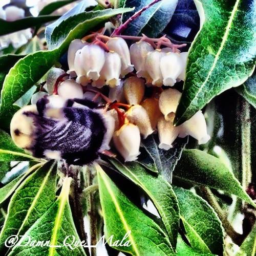 Fuzzy Wuzzy was a Bee by damn_que_mala
