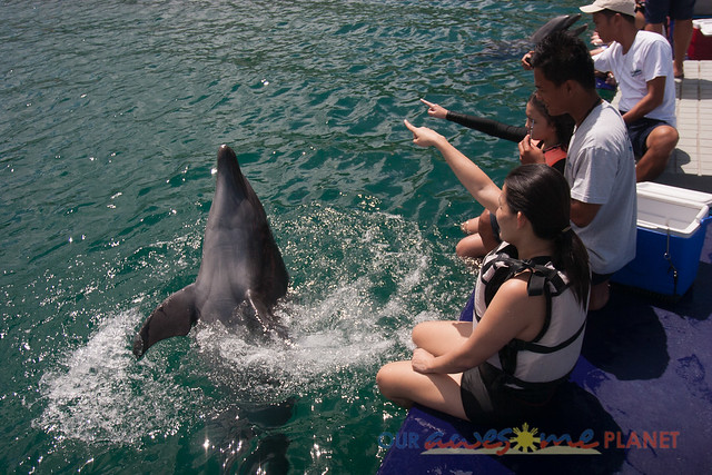 Swim Encounter with Dolphin-48.jpg