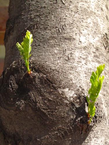 La dansa de la Primavera/La danza de la primavera (2) by debolsillo