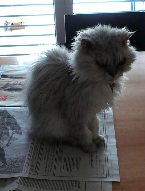 Fluffy on the newspaper