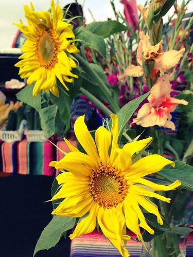 Sunflowers from Naegelin Farms