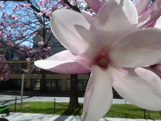 Springtime at MIT