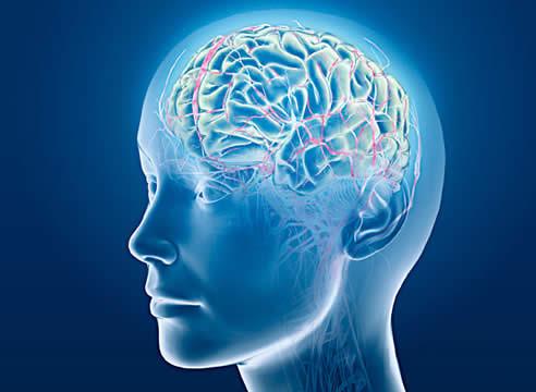 cerebro001