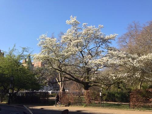 60 year old Magnolia