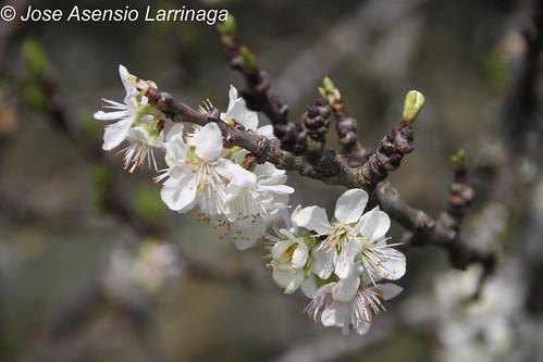 Orozko en primavera #EH #photography - 0391