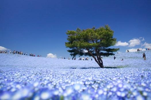 ひたち海浜公園 2013 #6