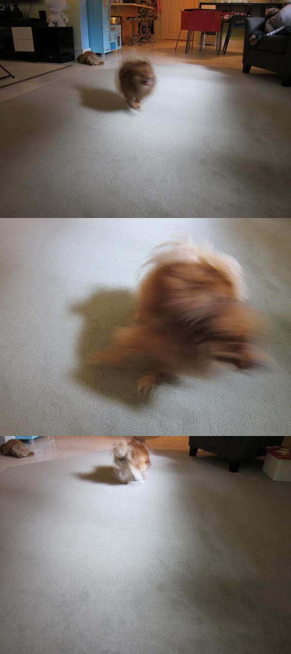 wetdogrun
