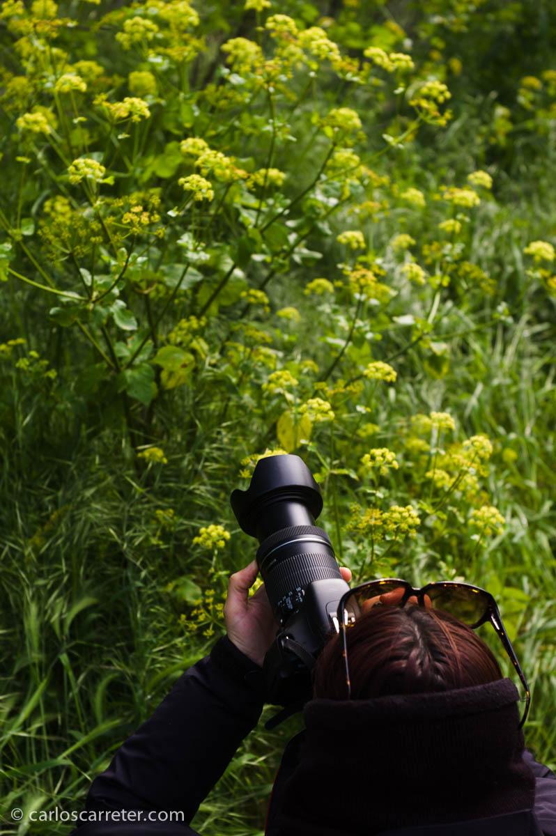 Peleando con la profundidad de campo y las umbrelas de florecillas amarillas