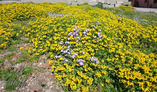 che bella è la primavera