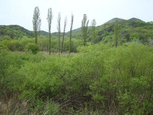 Auenwald bei Ulsan