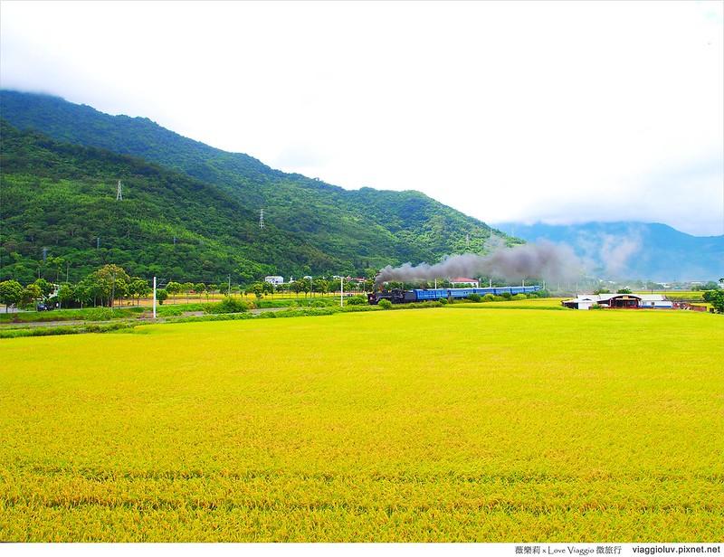 台東景點,稻田,蒸氣老火車 @薇樂莉 Love Viaggio | 旅行.生活.攝影