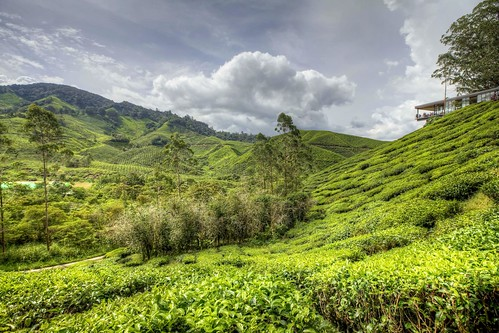 Cameron highlands : HDR