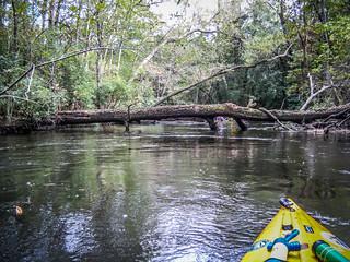 South Edisto River-090