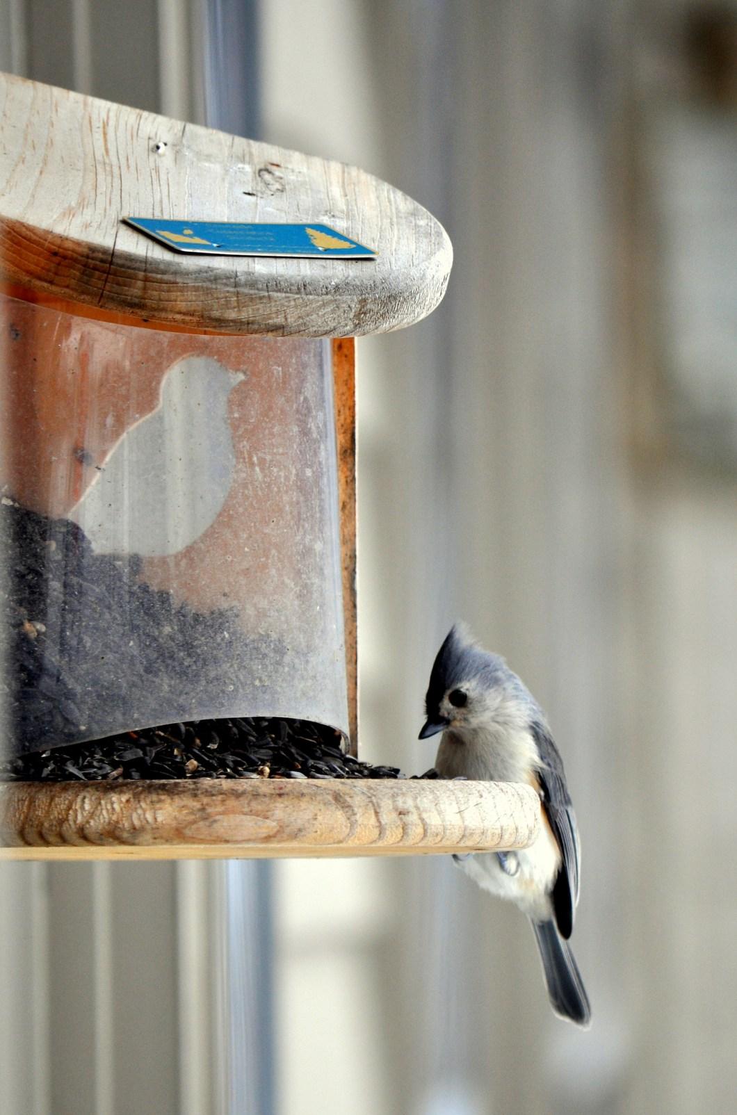 Imagen gratis de un pájaro comiendo