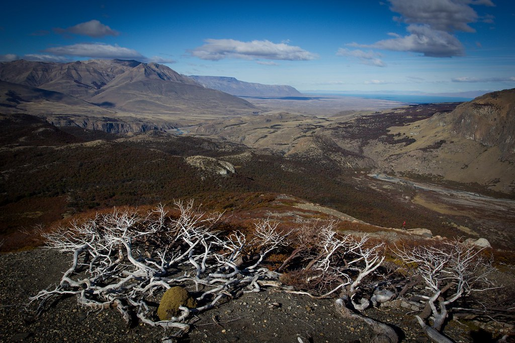 Ñires and lenga trees struggle to get grip on the rocky ground so close to the Southern Patagonian Ice Cap. A rock throw away the golden steppes of  Patagonia yearn for winds.