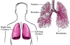 Pengobatan Pneumonia Obat Radang Paru Paru Basah