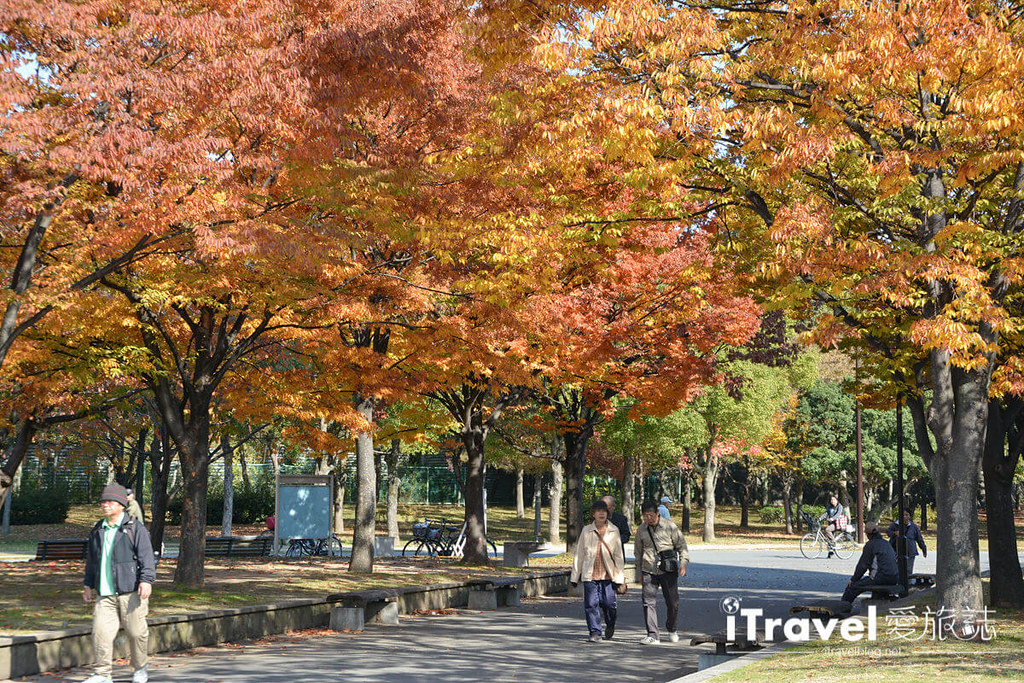 《京阪自由行》9天8夜赏枫行程攻略:关西红叶共舞银杏美景