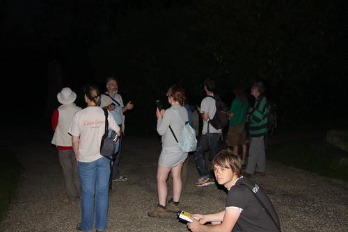 Bat group using detectors