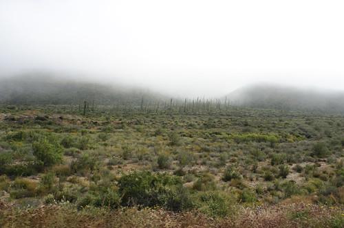 清晨的下加利福尼亞中央沙漠