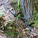 Tallulah Gorge Black Snake