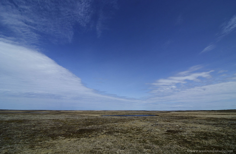 Southern Shore Barrens