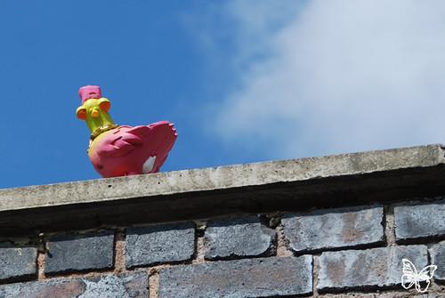 Ronzo - Pigeon Birdz