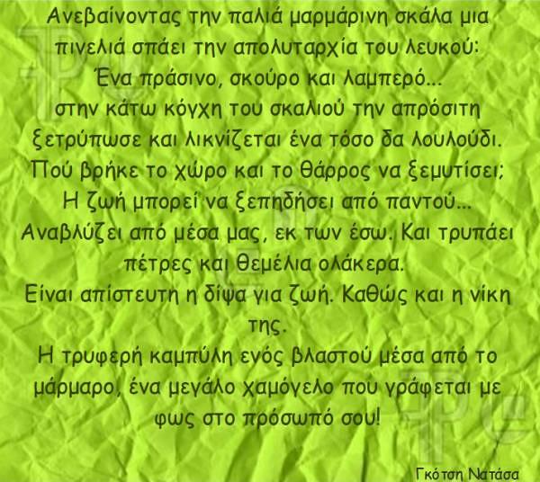 ANASTASIA GKOTSH