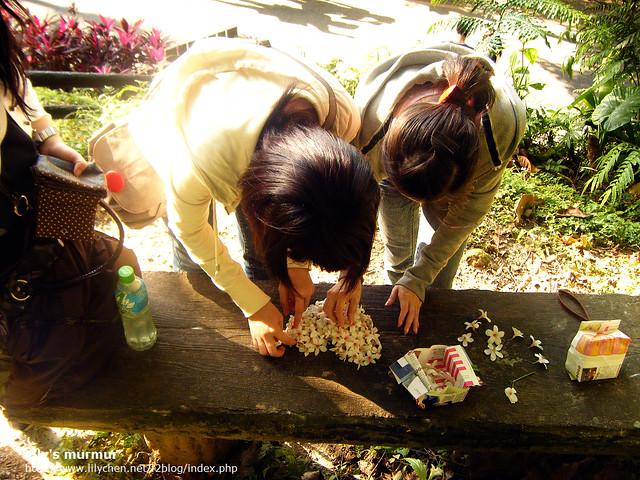 朋友一起把撿起來的桐花聚在一起,排成漂亮的圖案,拍照也好看。