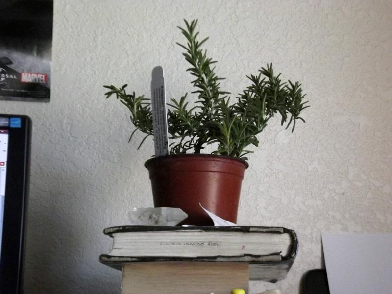 New houseplant