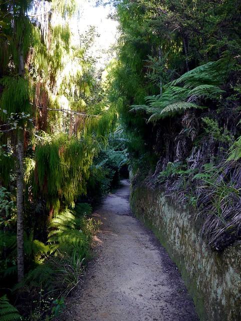 3) Dappled Path