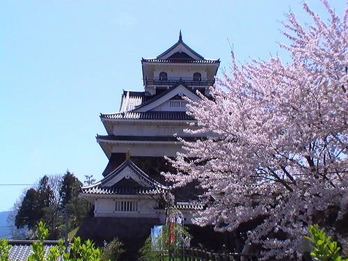 上山城の桜風景