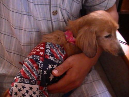 愛犬:ボニー(ミニダックスフント)