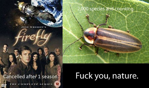 Firefly hate