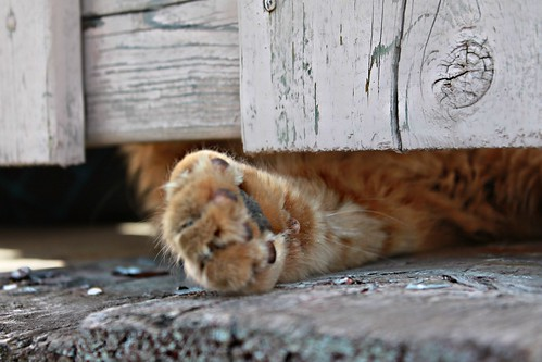 """""""The only thing a cat worries about is what's happening right now. As we tell the kittens, you can only wash one paw at a time."""" ~ Lloyd Alexander"""