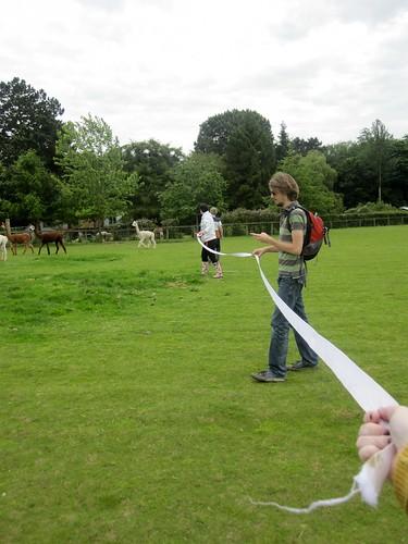 alpaca herding