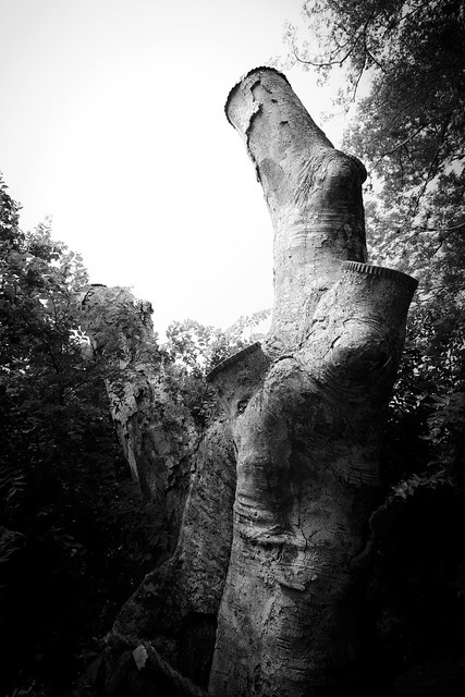 #42 The Giant Hackberry of Munakata Shrine