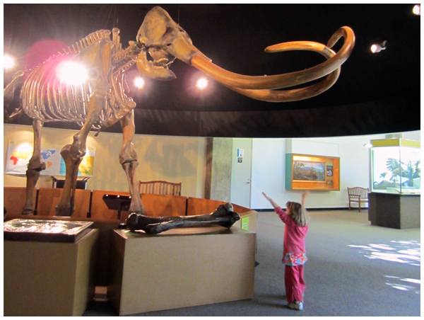 Exploring the Page Museum at the La Brea Tar Pits